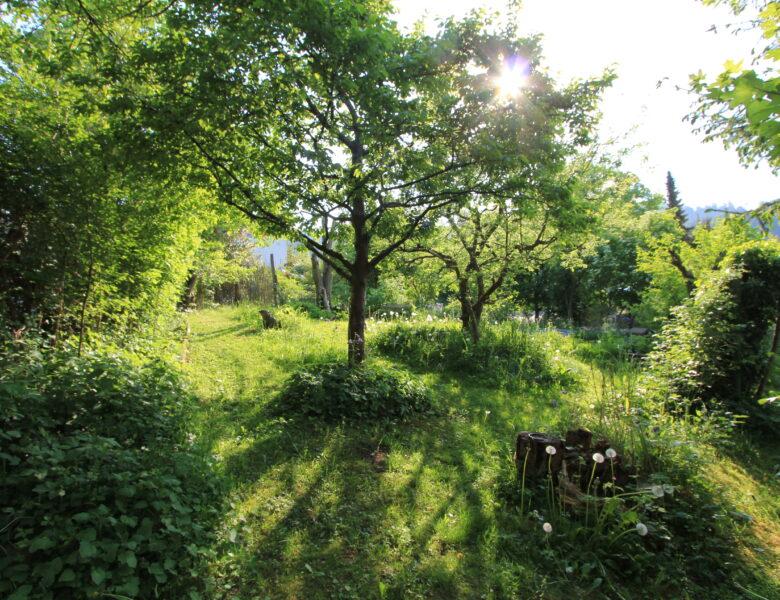Isabelles Garten