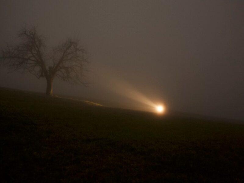 Die dunkle Nacht ist voller Leben