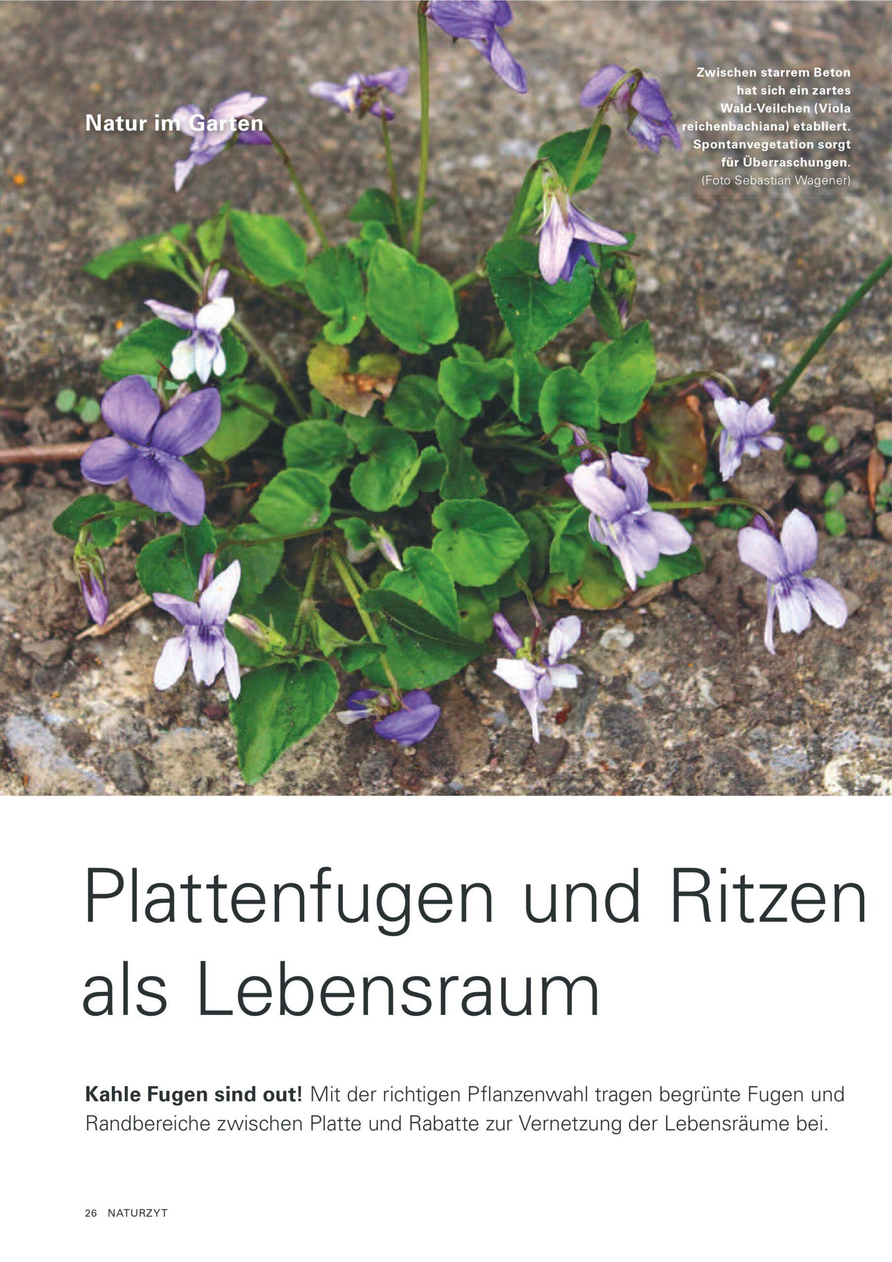 Plattenfugen und Ritzen_Naturzyt