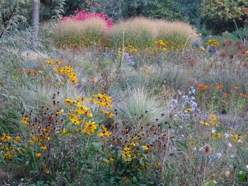 Gartenschönheiten im trockenen Beet