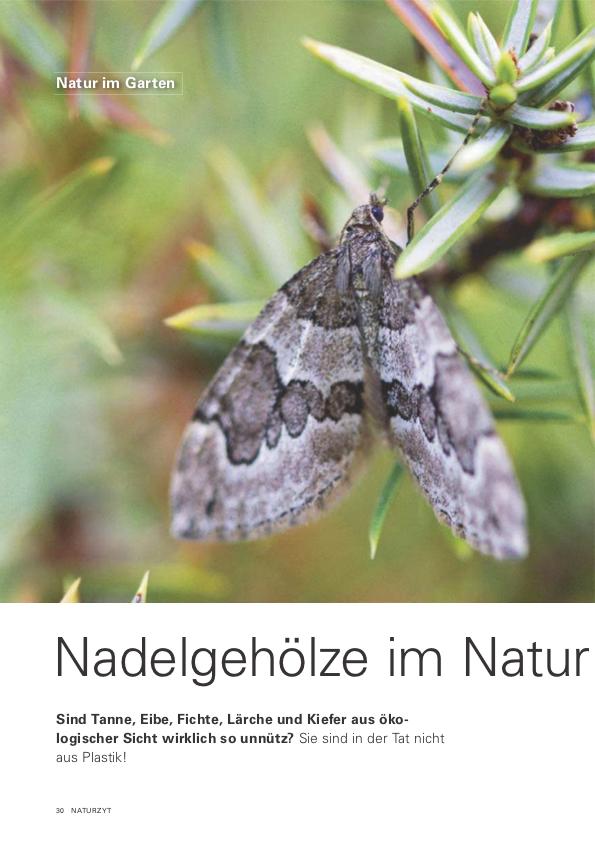 NTZ_1_2021_Nadelgehoelze